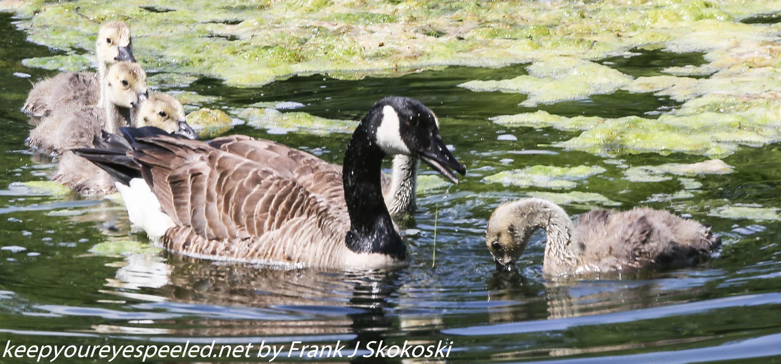 PPl Wetlands birds  (30 of 40)