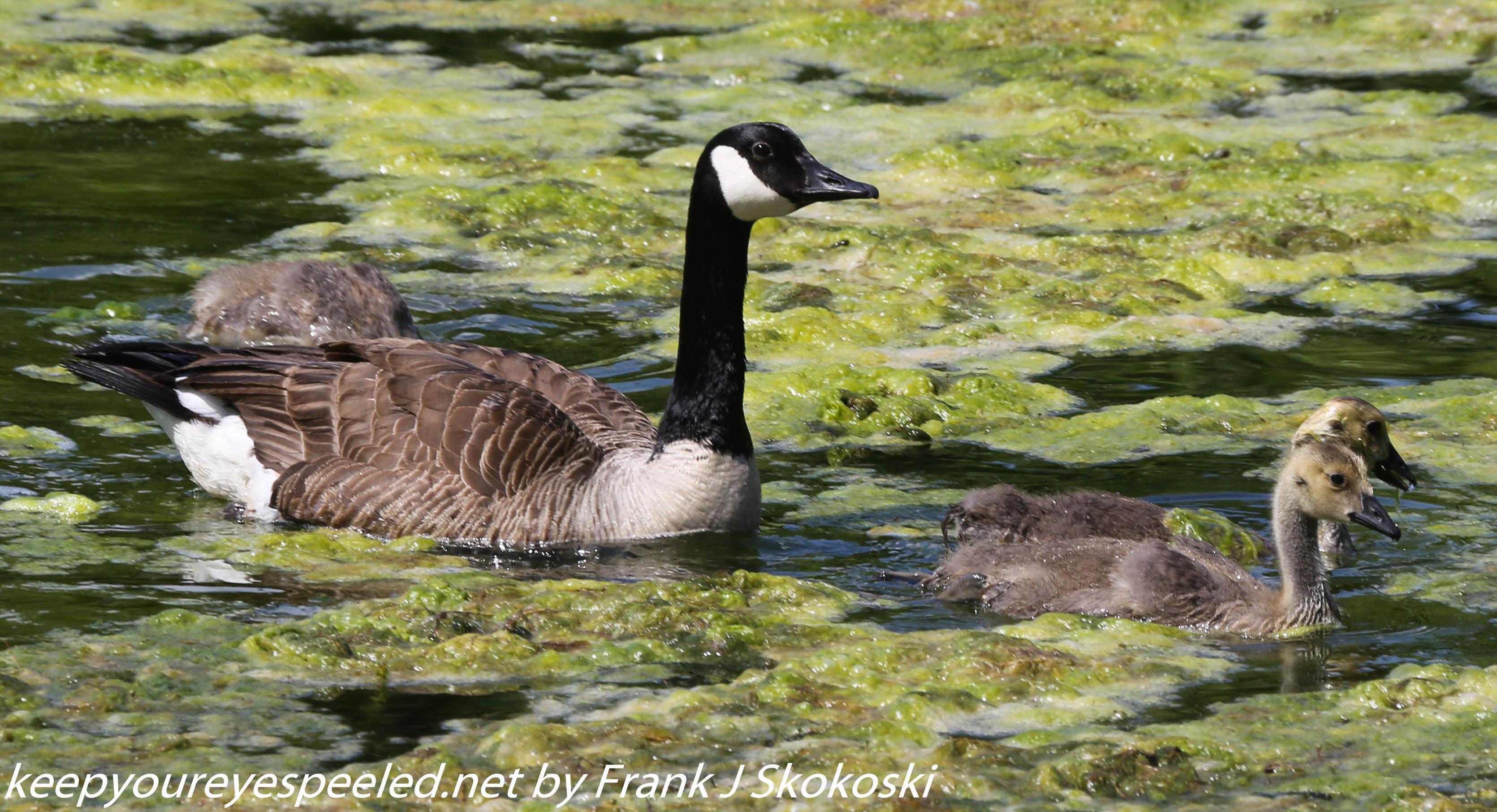 PPl Wetlands birds  (34 of 40)