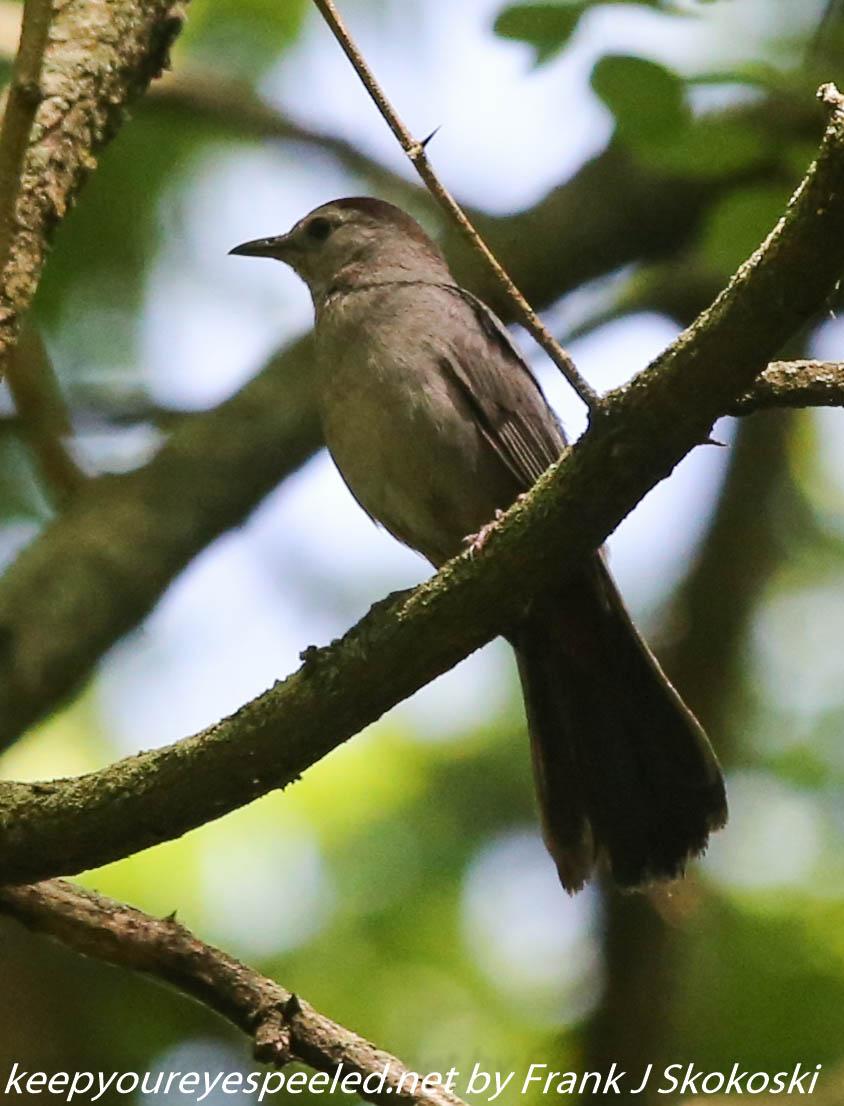 PPl Wetlands birds  (37 of 40)