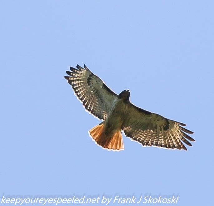 PPl Wetlands birds  (38 of 40)