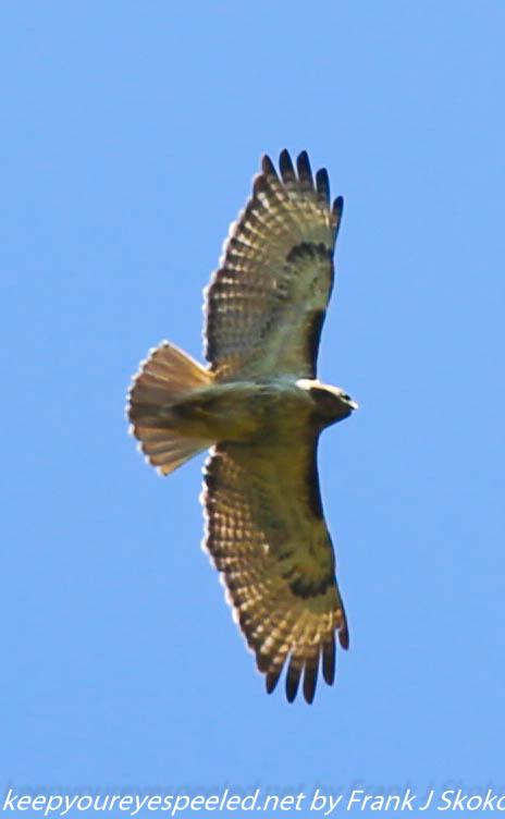 PPl Wetlands birds  (39 of 40)
