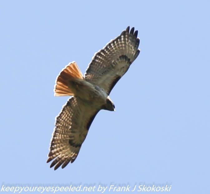 PPl Wetlands birds  (40 of 40)
