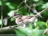 PPl Wetlands birds  (1 of 40)
