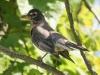 PPl Wetlands birds  (11 of 40)
