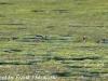 PPl Wetlands birds  (13 of 40)