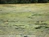 PPl Wetlands birds  (14 of 40)