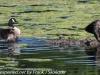 PPl Wetlands birds  (16 of 40)