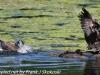 PPl Wetlands birds  (18 of 40)
