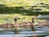 PPl Wetlands birds  (19 of 40)