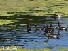 PPl Wetlands birds  (21 of 40)