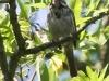 PPl Wetlands birds  (3 of 40)