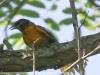 PPl Wetlands birds  (4 of 40)