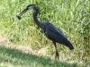 PPl Wetlands birds  (5 of 40)