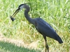 PPl Wetlands birds  (6 of 40)