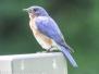 PPL Wetlands birds June 24 2017