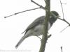 PPL Wetlands birds -1