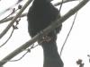 PPL Wetlands birds -2