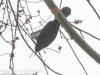 PPL Wetlands birds -3