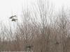 PPL Wetlands birds -4