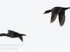 PPL Wetlands birds -6
