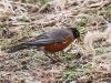 PPL Wetlands birds -8