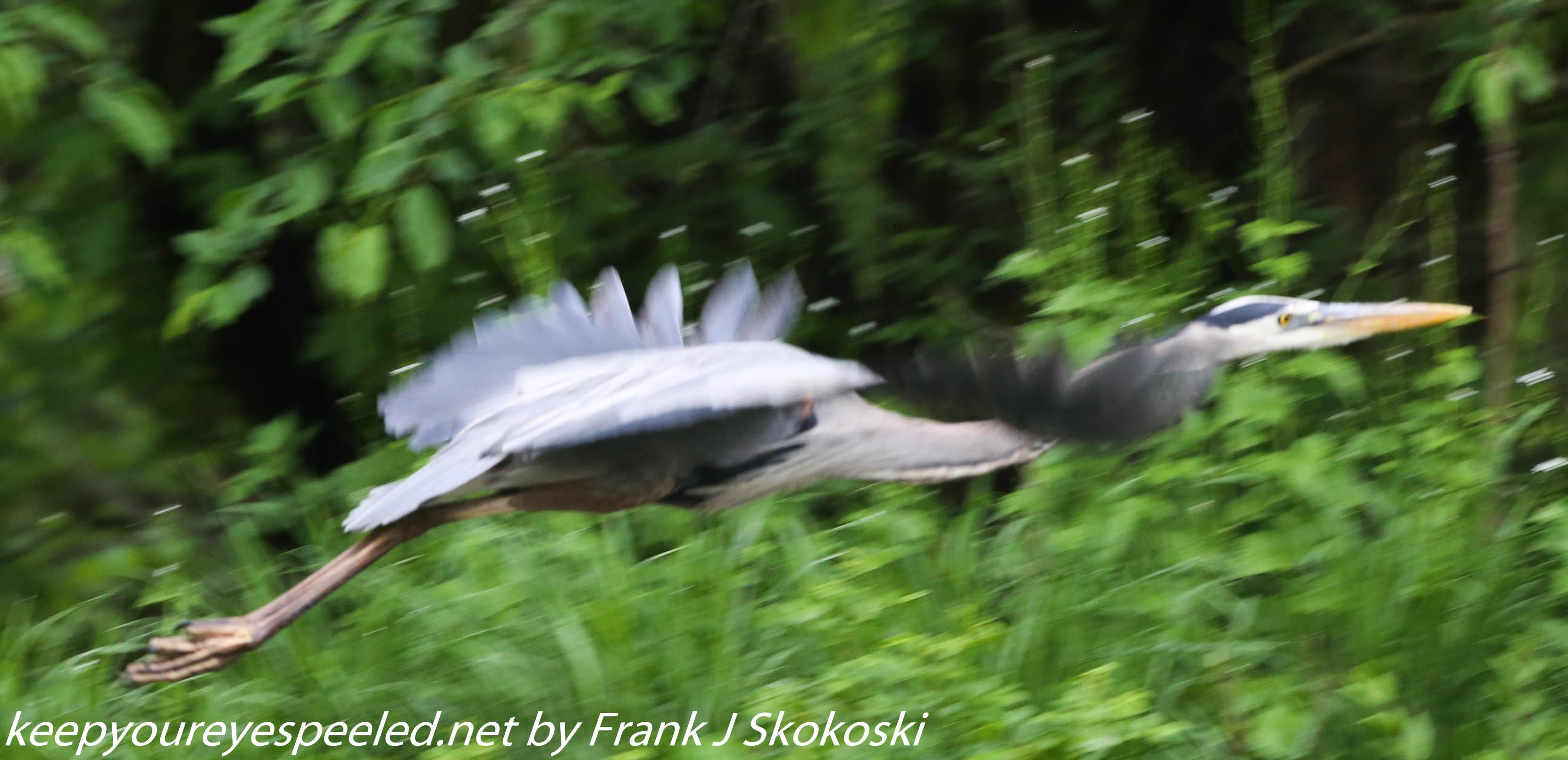PPL Wetlands birds (13 of 33)