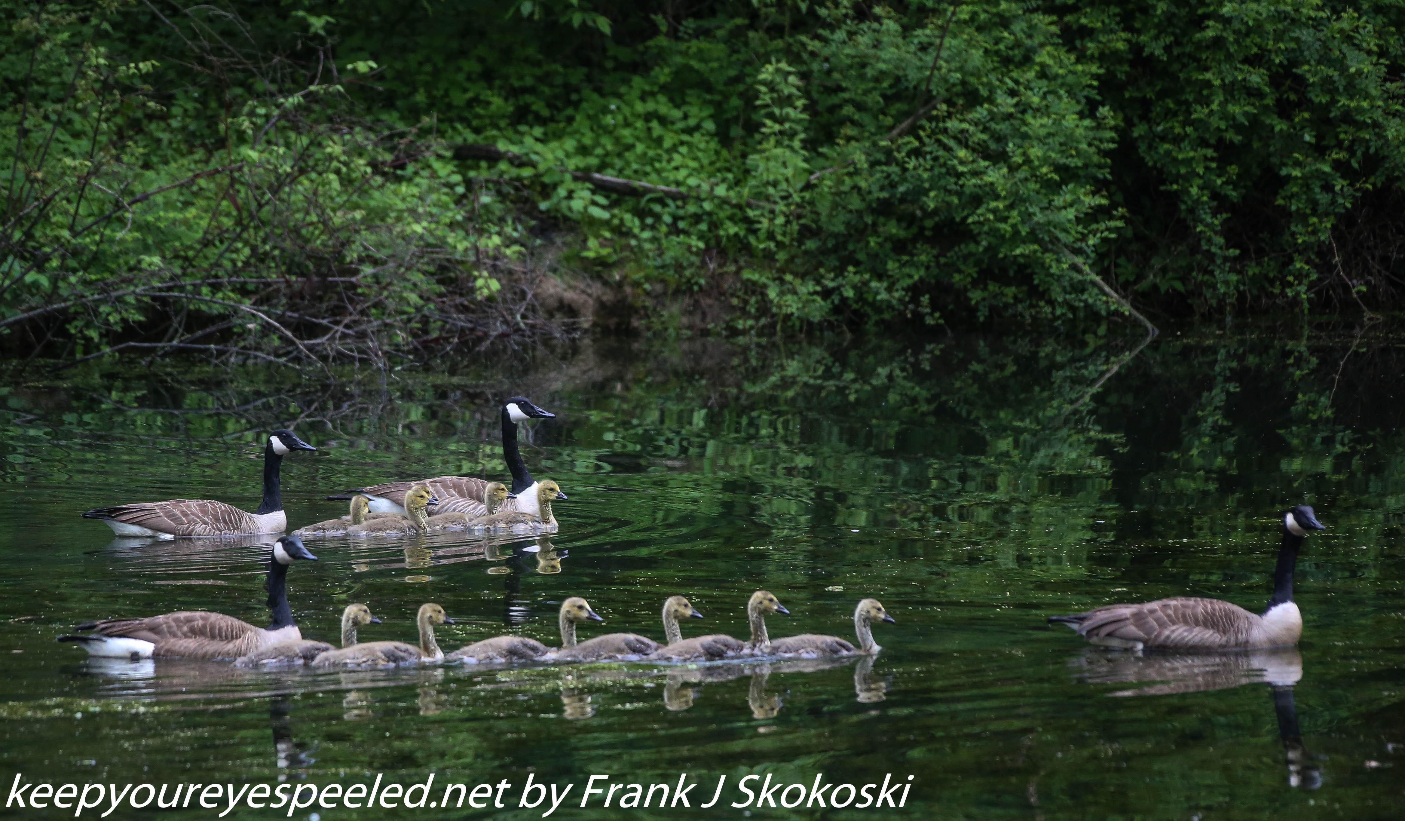 PPL Wetlands birds (15 of 33)
