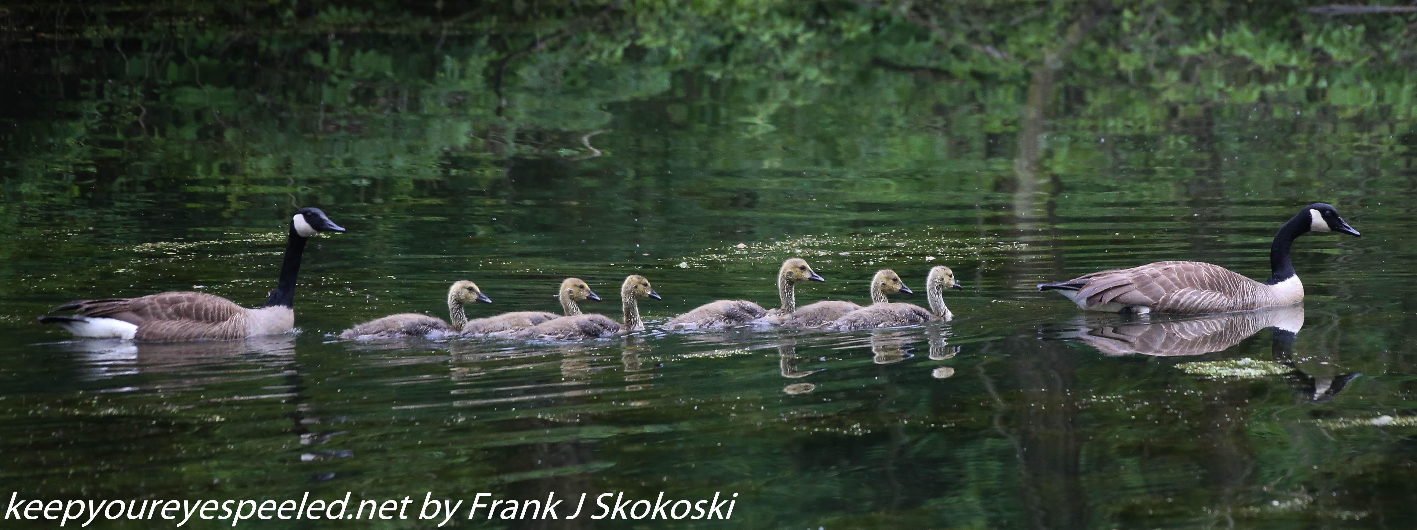 PPL Wetlands birds (16 of 33)