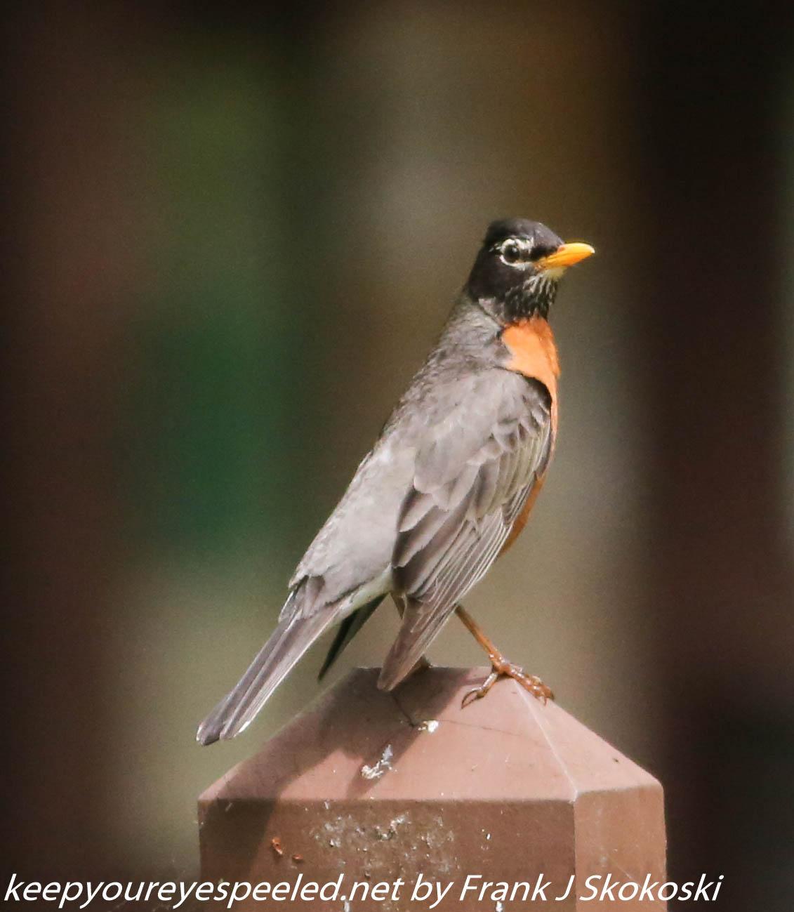 PPL Wetlands birds (25 of 33)