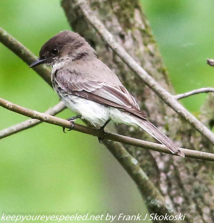 PPL Wetlands birds (26 of 33)