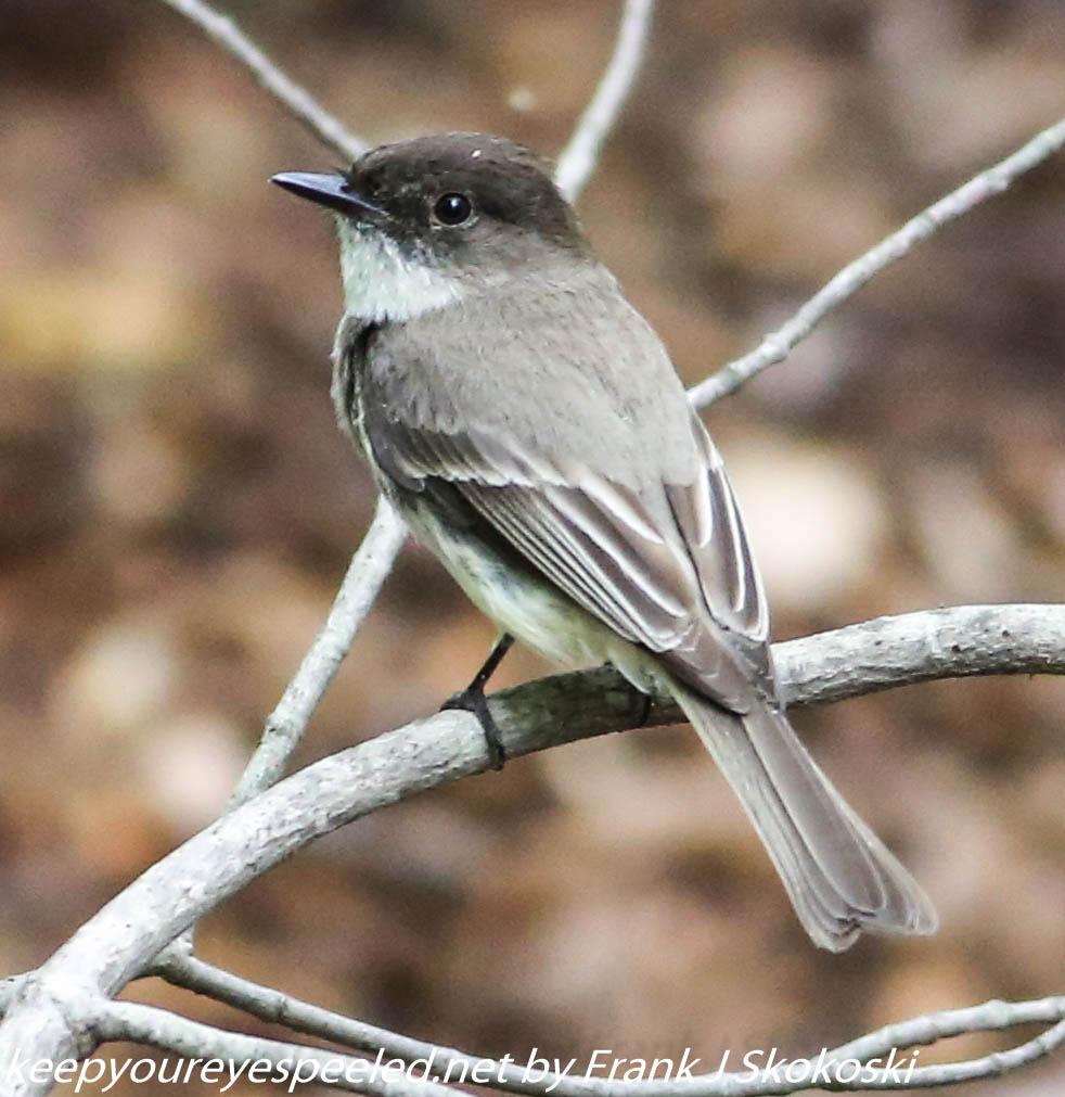 PPL Wetlands birds (27 of 33)