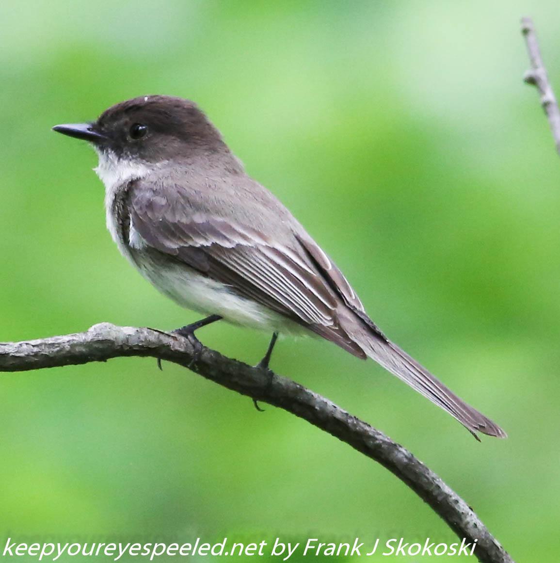 PPL Wetlands birds (28 of 33)