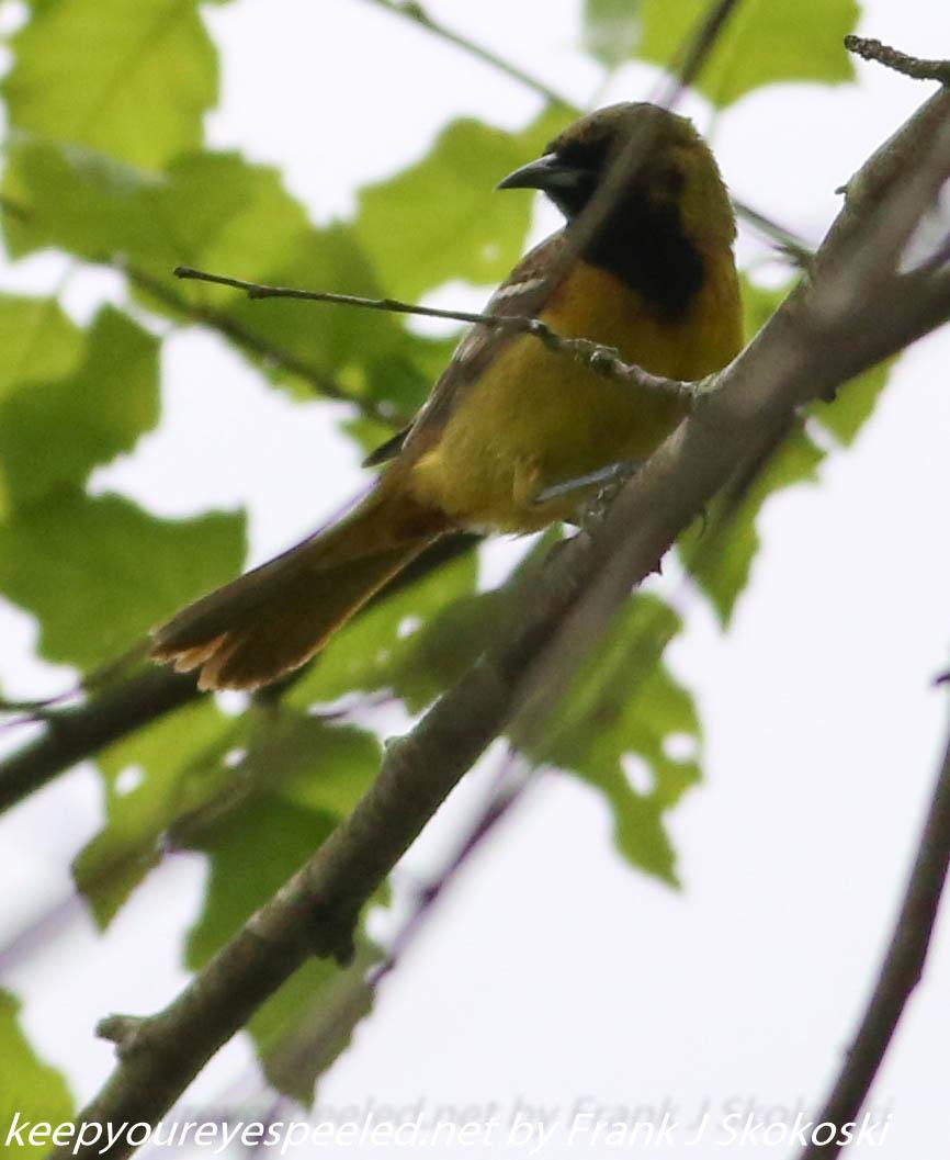 PPL Wetlands birds (29 of 33)