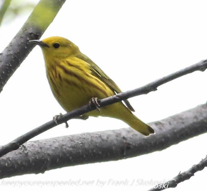 PPL Wetlands birds (32 of 33)