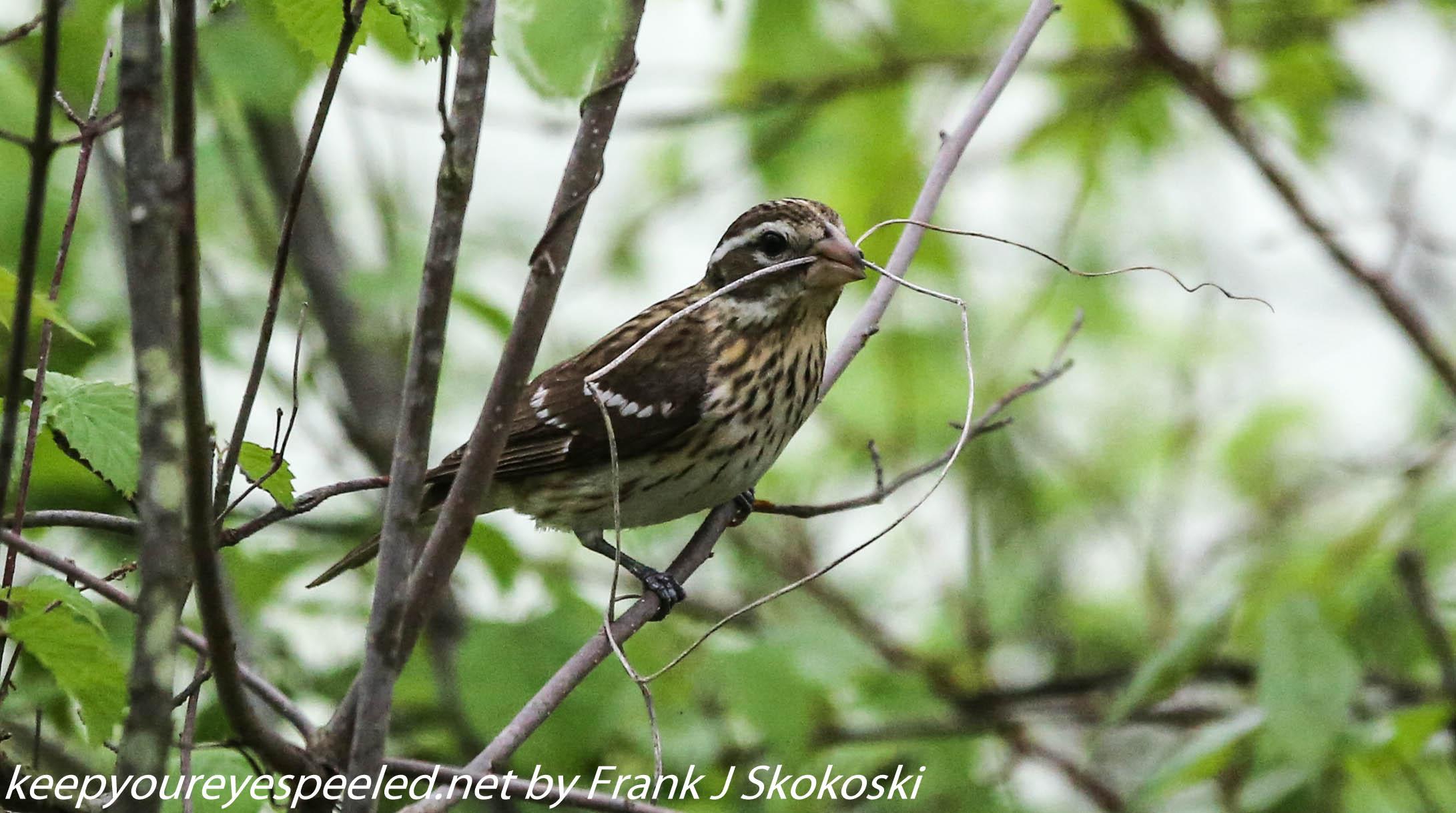 PPL Wetlands birds (7 of 33)