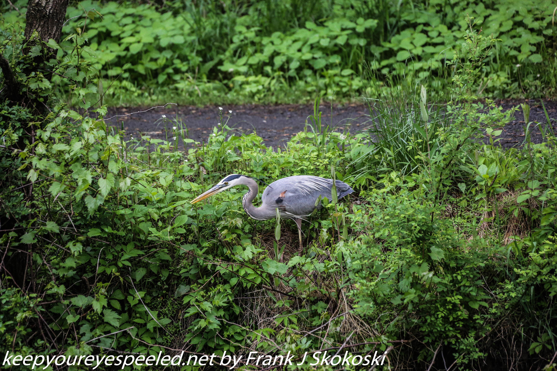 PPL Wetlands birds (8 of 33)