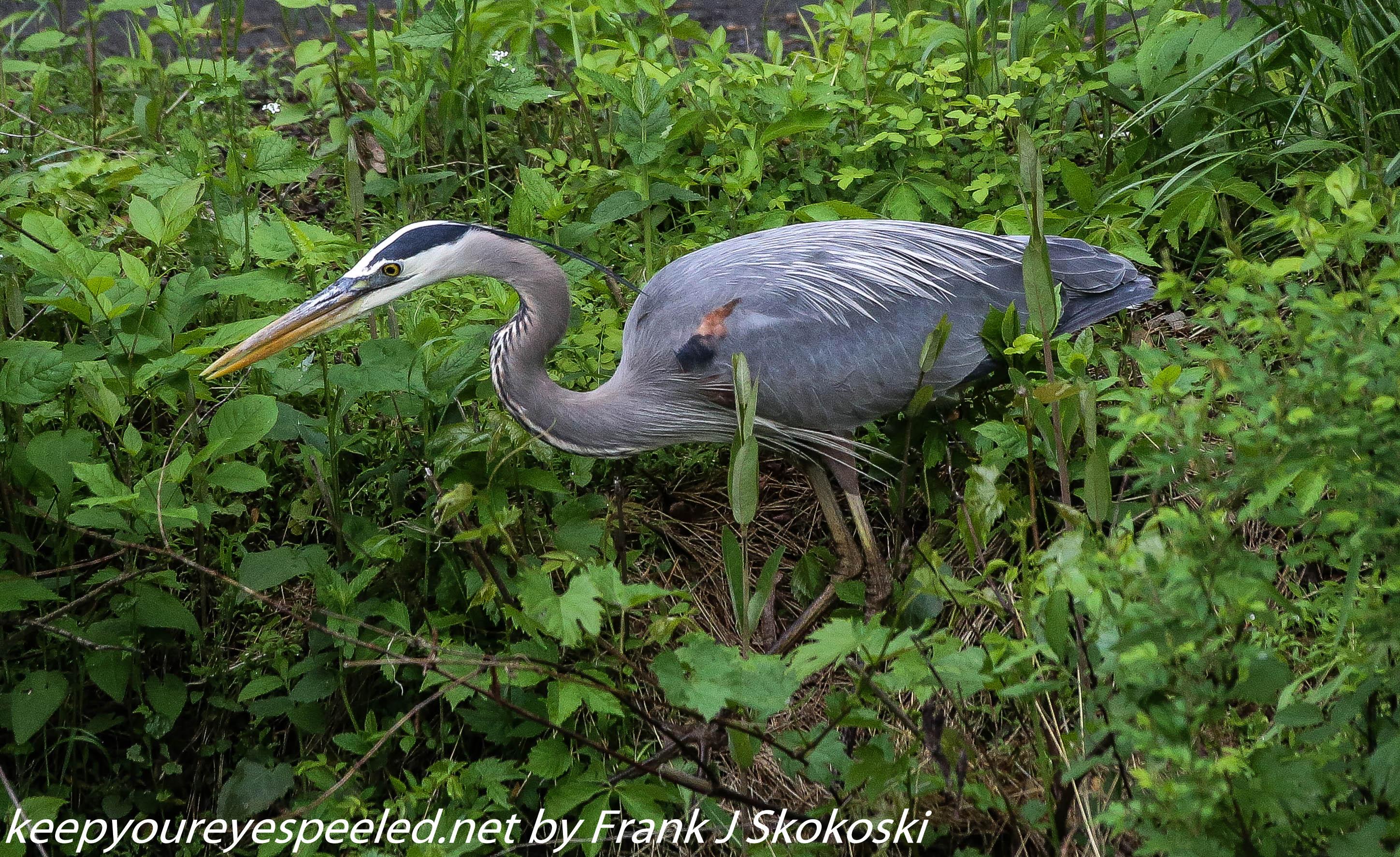 PPL Wetlands birds (9 of 33)