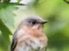 PPL Wetlands birds (1 of 33)