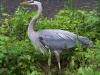PPL Wetlands birds (11 of 33)