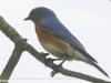 PPL Wetlands birds (14 of 33)