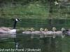 PPL Wetlands birds (17 of 33)