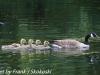 PPL Wetlands birds (18 of 33)