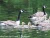 PPL Wetlands birds (19 of 33)