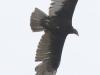 PPL Wetlands birds (21 of 33)