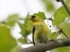 PPL Wetlands birds (22 of 33)