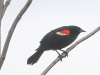 PPL Wetlands birds (23 of 33)