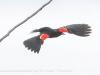 PPL Wetlands birds (24 of 33)