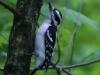 PPL Wetlands birds (3 of 33)
