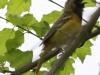 PPL Wetlands birds (30 of 33)