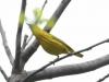 PPL Wetlands birds (31 of 33)